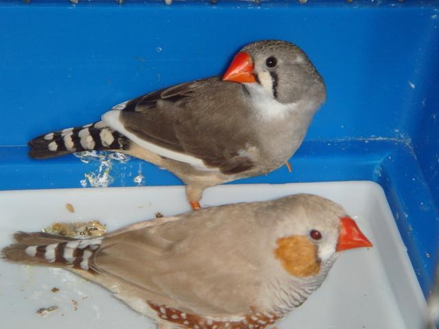 Птиц в домашних условиях 646